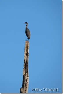 Heron on top