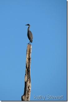 Heron on top