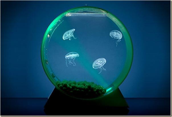Aquariums créatifs et insolites-029