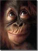 monos piensan blogdeimagenes (10)
