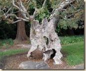 tree weird