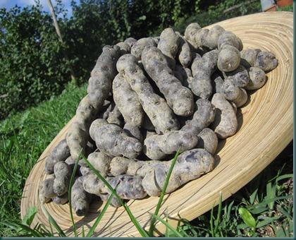 patate viola nel prato