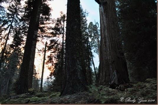09-20-14 Sequoias 07
