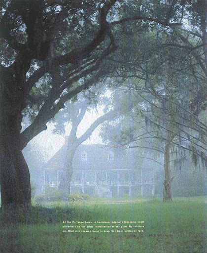 A 1750s French colonial house in Louisiana settled in the dewy mist of a hot Southern day. (Martha Stewart Living)