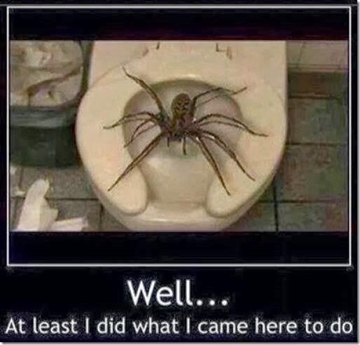 australia-scary-spiders-018