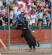 ©Dolores de Lara (76)