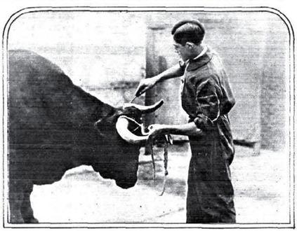 1930-05-13 (Estampa) Apuntillando a la ballestilla (Antoñete Iglesias