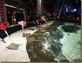 Atlanta Aquarium_013