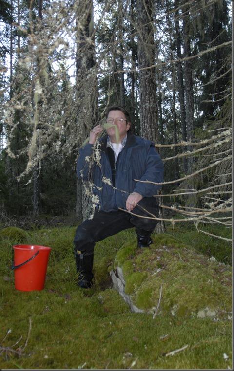 suomalainen syys metsä suppilovahvero 074