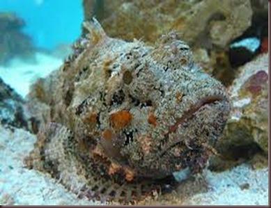 Amazing Pictures of Animals. Poison, Dangerous.6.Stonefish.Alex
