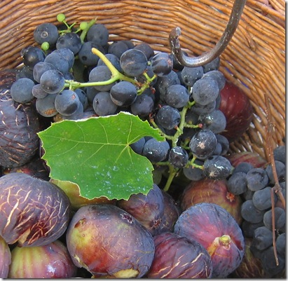 fig basket cropped