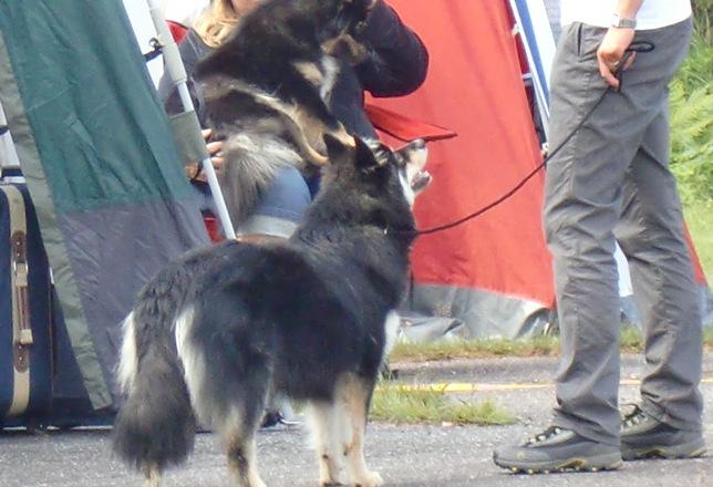Aug.Biri, DK,Trollsvann-11012