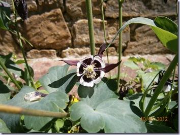 Giardino iris e rose 304