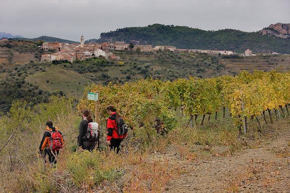 Antic camí ral de Gratallops a Bellmunt del Priorat.  Xarxa de camins del Priorat. Al fons, Bellmunt. DOQ Priorat. Gratallops, Priorat, Tarragona