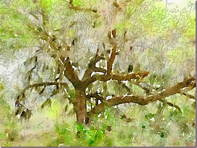 treeforest