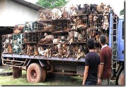 Cachorros que seriam servidos nas mesas do Vietnã