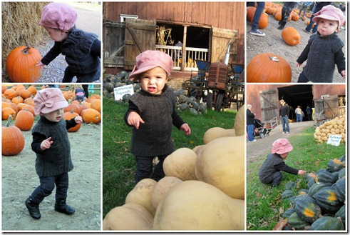 Pumpkin Patch Two2