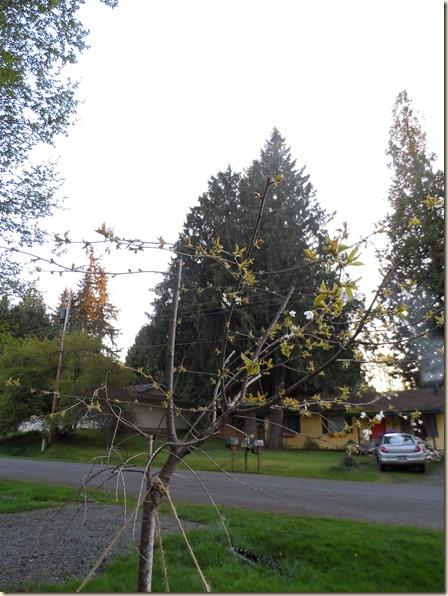 4-14 cabin front yard 4