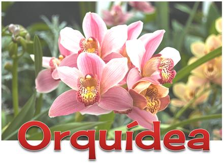6 ORQUIDEA