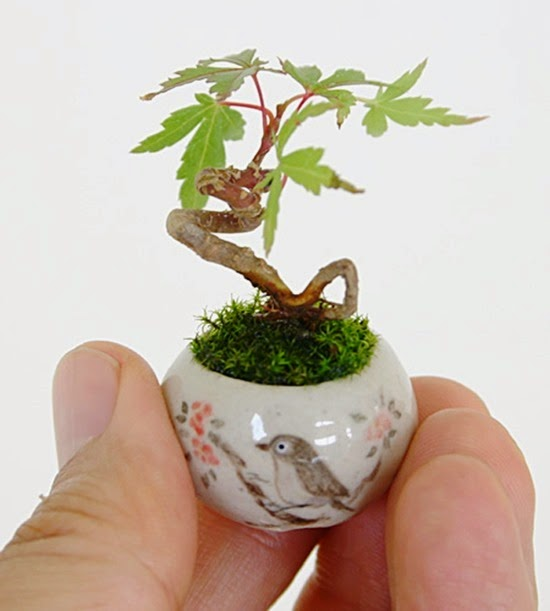 Mini Bonsai Cho-Mini 06