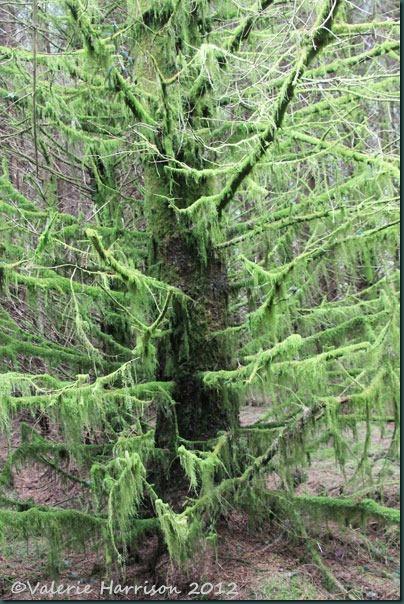 8-mossy-tree