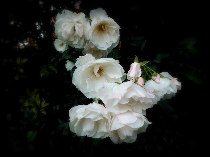 enchanting pinks