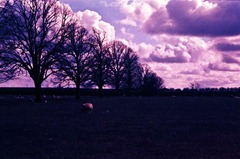 Summer-Fields-5---XPRO