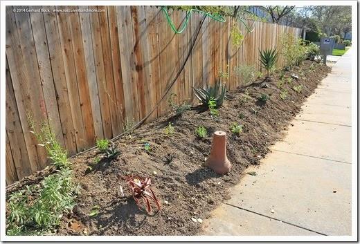 140316_desert_garden_planting2