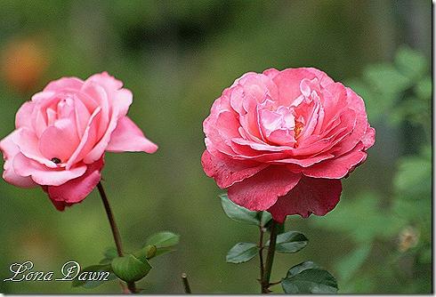 PinkFlamingo3_Aug31