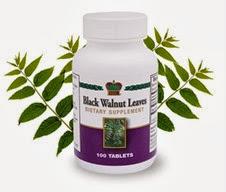Листа от черен орех / Black Walnut Leaves