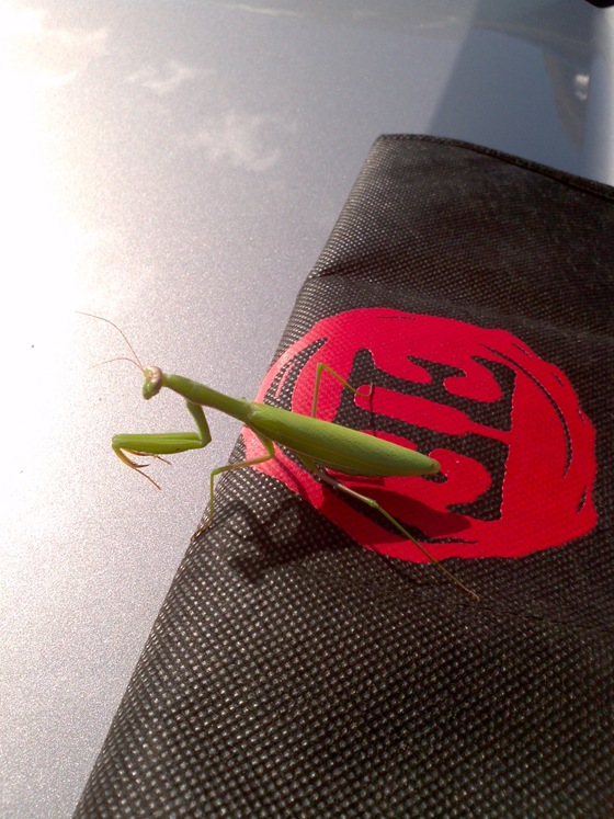 Church & State Guard Mantis