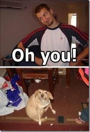 ohyou!dog