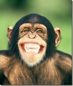 grinning_chimpanzee_42-16477032
