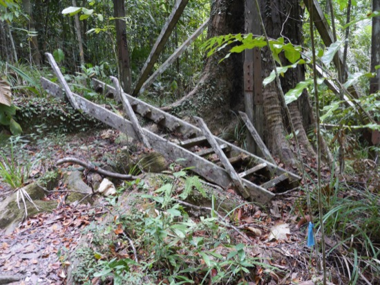The reason the tree tower is closed - the bottom steps have rotted away