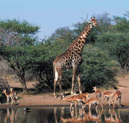 NO.3 Great Limpopo Transfrontier Park