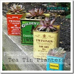Tea Tin Planters Banner