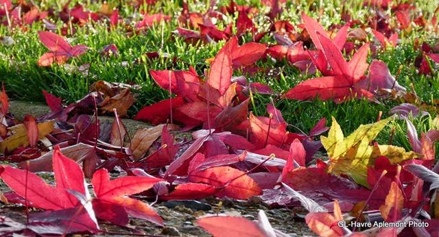 caucriauville automne 013