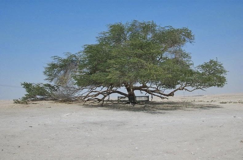 tree-of-life-6