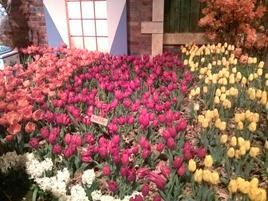 camera pics April 2014 004