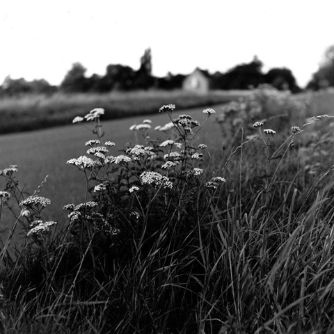 Roadside-Flowers