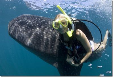 whale shark i