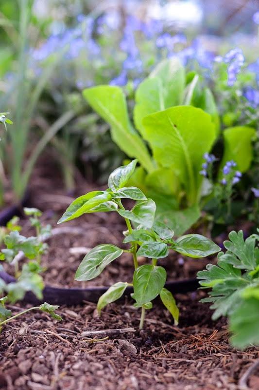 garden-11306
