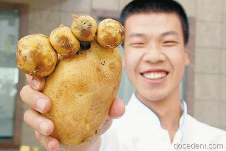 legumes e formas6