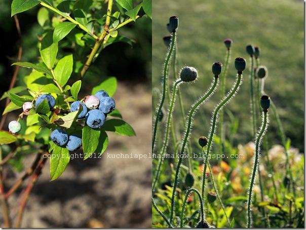 ogród i biszkopt z papierówkami1