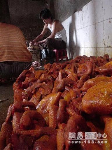 GaChet3_Công đoạn cuối cùng là tẩm hóa chất tăng độ bắt mắt cho gà..jpg