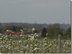 Rijkel: op de achtergrond ziet men de spits van  de toren van de basiliek van Kortenbos