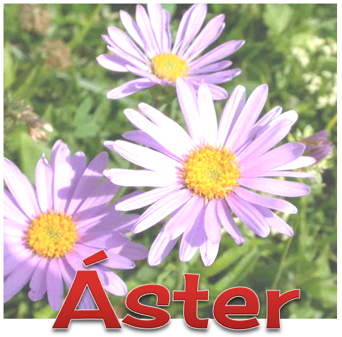 [2%2520ASTER%255B8%255D.png]