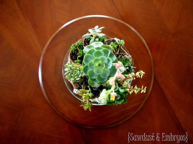 Succulent Centerpiece using Birch Logs and Twine {Sawdust & Embryos}