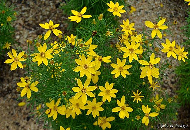 Glória Ishizaka - Flor amarela 22