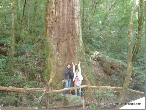司馬庫斯-day2-巨木8